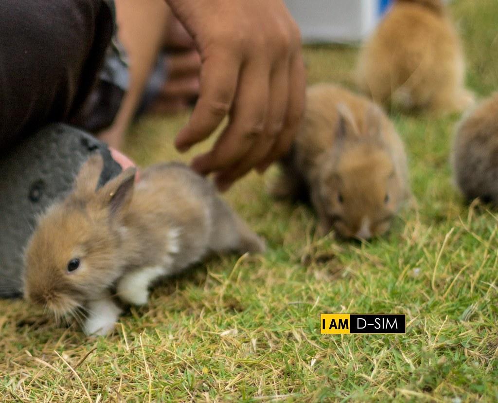 Baby Rabbit (1)