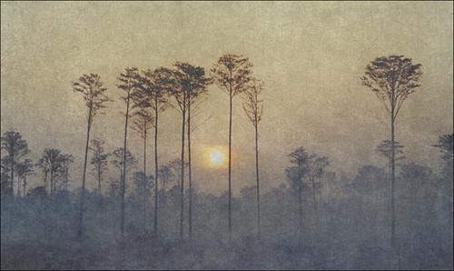 trees sky art