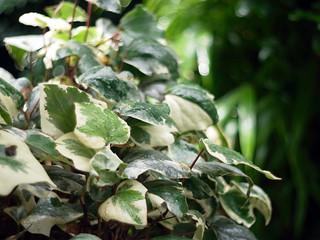 Foliage plant after rain.