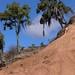 What's left of an old cloud forest (what it used to be) - Lo que queda de un bosque de neblina (anteriormente); área al sur de La Cieneguilla (al noroeste de Santo Domingo Yanhuitlán, Región Mixteca, Oaxaca, Mexico por Lon&Queta