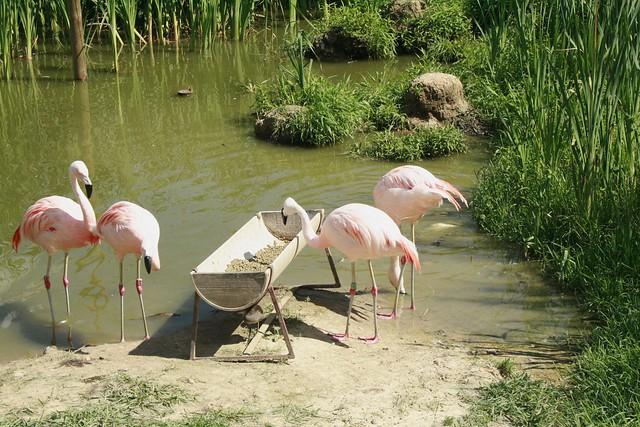 Nowe Zoo w Poznaniu