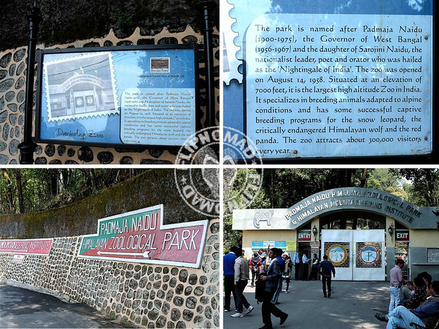 The Himalayan Animals at Darjeeling Zoo