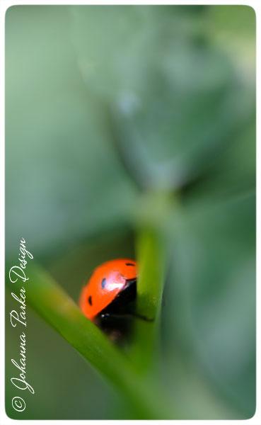 Ladybug-Behind
