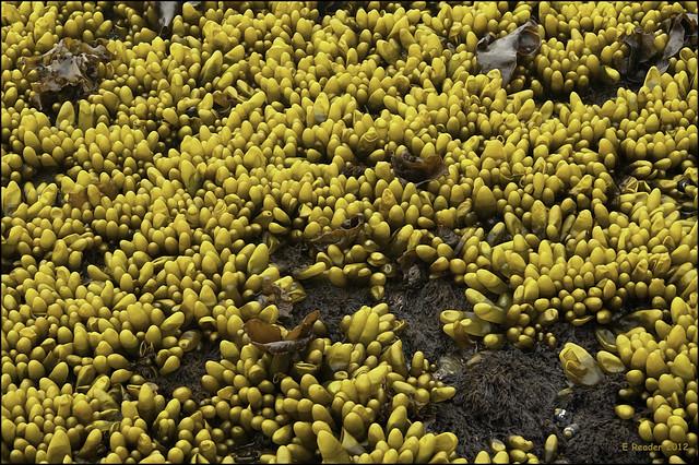 Ocean Plants Names Ocean Floor Plants