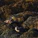 Otters (Derek Mills)