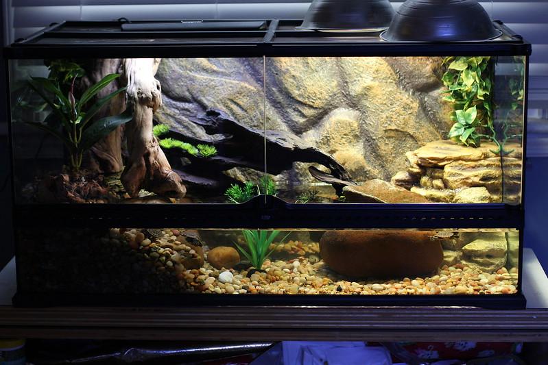 5 gallon fish tank terrarium - 30 Gallon Square Glass ...