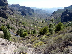 Gran Canaria - Roque Nublo Surroungings in the Spring