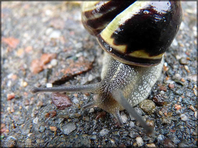 P1270228_snail