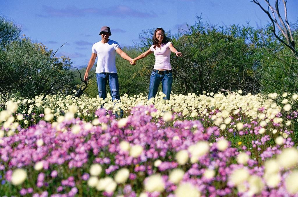 003678-Wildflowers Murchison 1.jpg