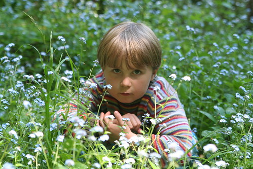 Asher in the Wildflowers