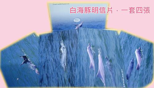 白海豚明信片
