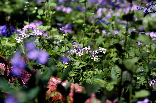 Wild Flower Study II