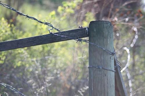 Fence + Bokeh