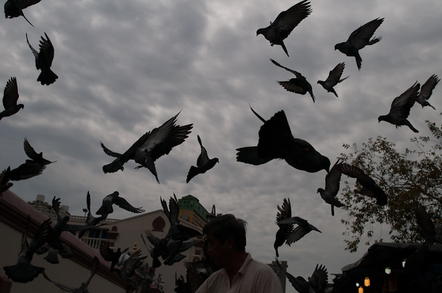 pigeons underexposed
