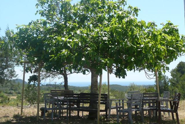 Can Domingo, Ibiza restaurant