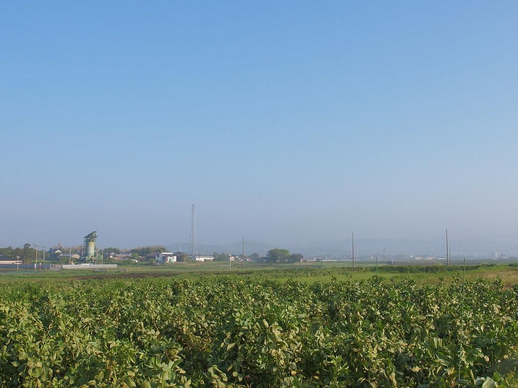 Fava Beans Fields