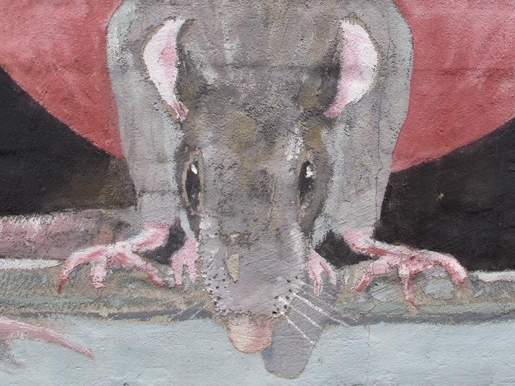 Rat detail