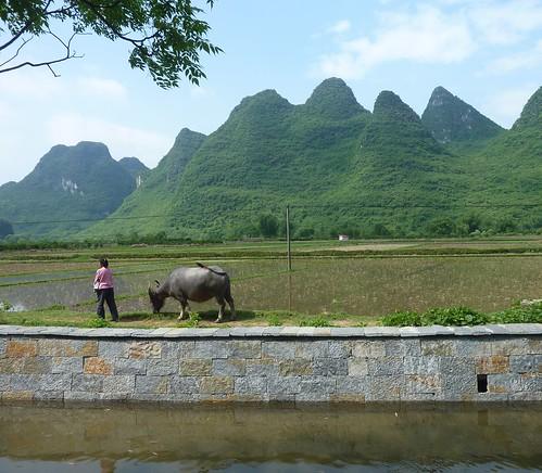 C-Guangxi-Yangshuo-Tour-Yulong (58)