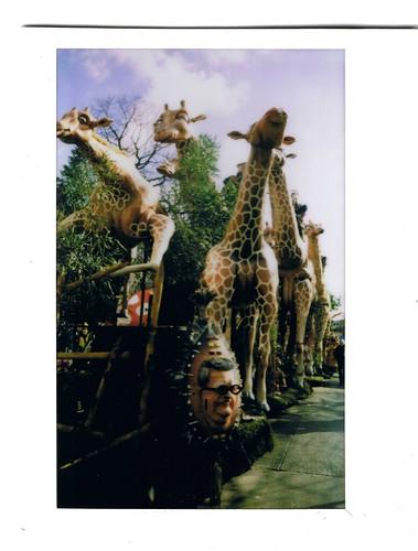 instax carnaval 2012 - giraffes