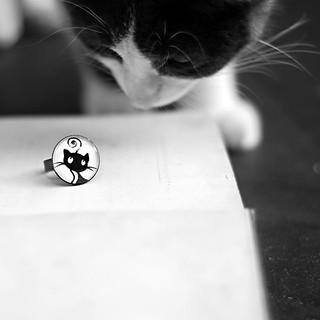 Patafix le chat qui glue
