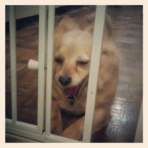 Doggie Jail by Jodi K.