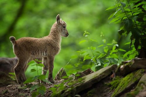 Bezienswaardigheden Zwarte Woud Top 10 nummer 10 Pforzheim Wildpark