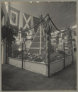 Pineapple and fruit display at the Jubilee Exhibition, Brisbane, 1909