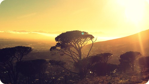 trees light sun nature forest sunrise shine capetown thelionking hakunamatata