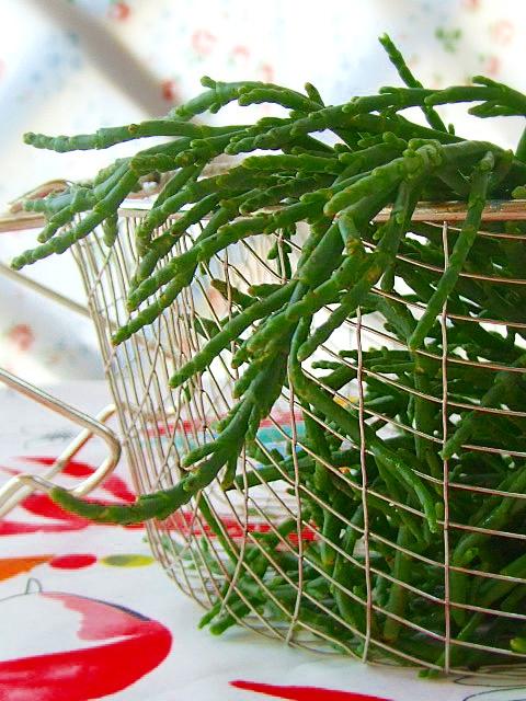 salicornia6