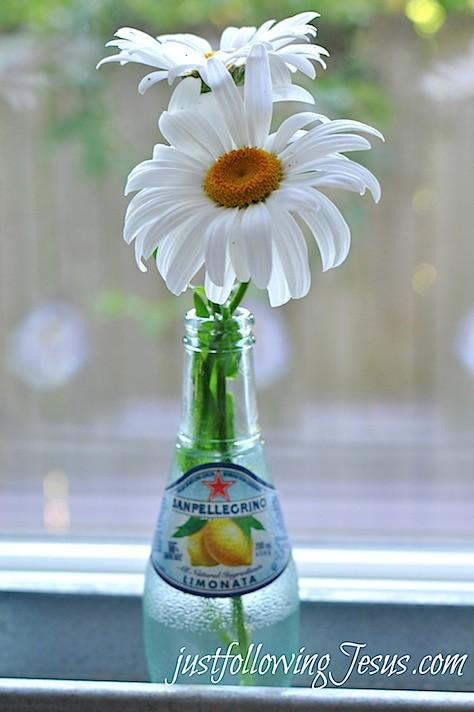 daisies 4.jpg