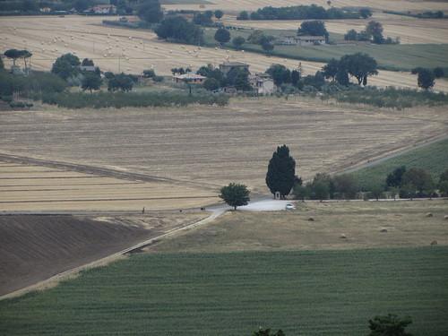 fields meet at shrine