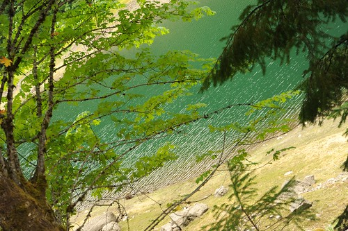 Light wind ripples the emerald green water and gold shore of Detroit Lake, trees, Breightenbush, Oregon, USA by Wonderlane
