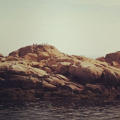 cormorants sunning themselves #morning #maine