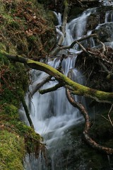 stream, waterfall, woodland, rainforest, water, tree, nature, creek, body of water, watercourse, forest, wilderness,