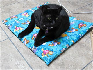 Tica on her cat cushion
