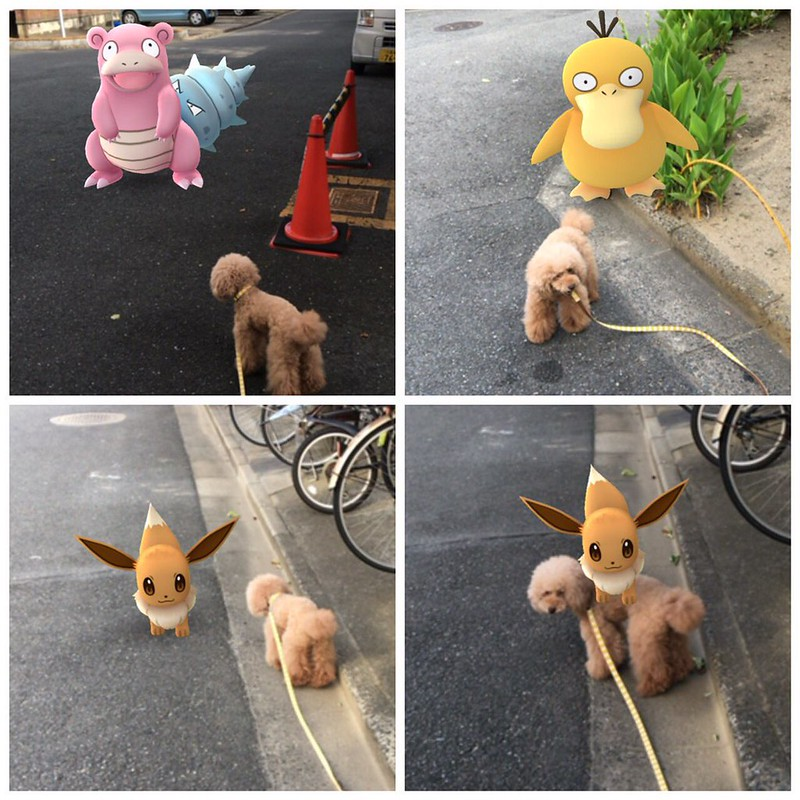 Pokemon Go and Pets