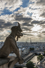 Gargola Notre Dame
