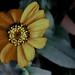 FlowerSad by PappyOSU