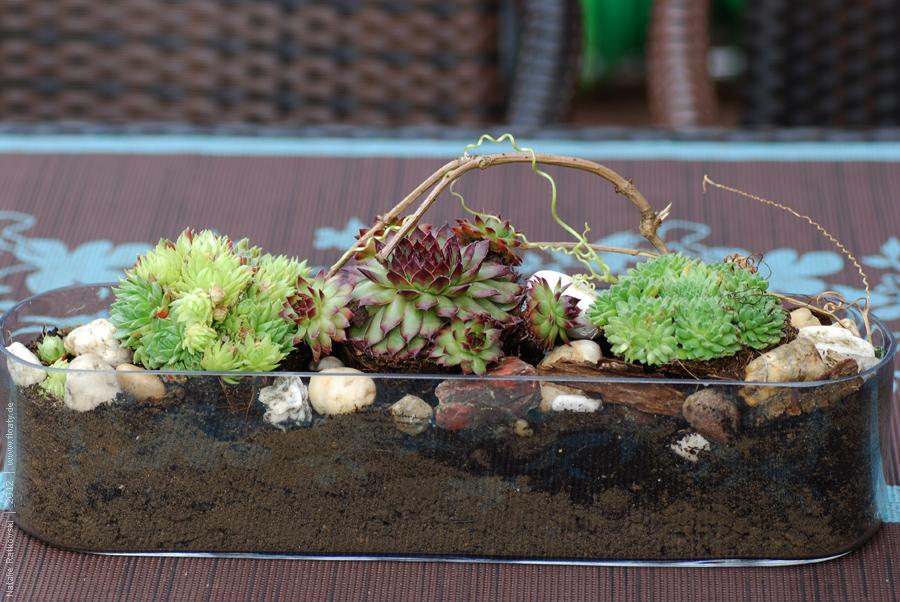 Succulents in my garden