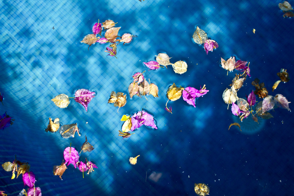 pool_water_petals