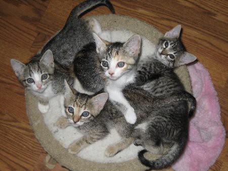 Kittens_homepage