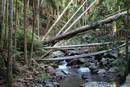 Stream at the Mt Tamborine Skywalk by holidaypointau