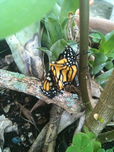 20120908 04 mariposa