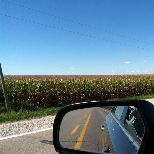 Corn's changing color. #iowa