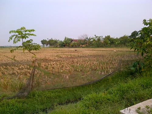 Tanah-dijual-20ha-desa-Sukatani-Bekasi-5