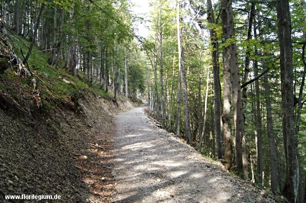 Fahrwege im Wald, langweiliger Abstieg über den Hirschtalsattel zurück nach Lenggries
