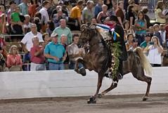 rodeo(0.0), cattle-like mammal(0.0), english riding(0.0), bull(0.0), tradition(0.0), pack animal(0.0), matador(0.0), bullfighting(0.0), animal sports(1.0), equestrianism(1.0), stallion(1.0), people(1.0), event(1.0), equestrian sport(1.0), sports(1.0), performance(1.0), traditional sport(1.0),