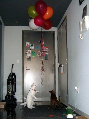 gunhee-kylieballoons647
