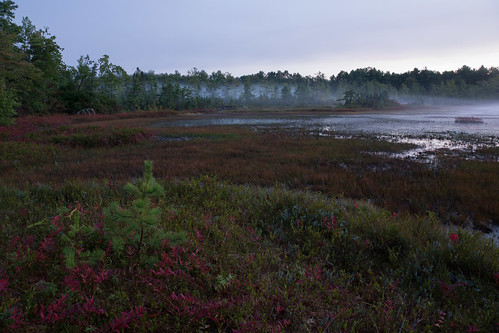 amherst newhampshire bog dawn morning sunrise