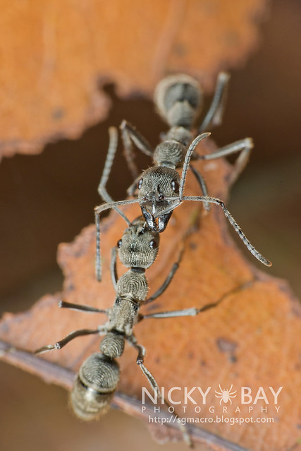 Ants - DSC_3605